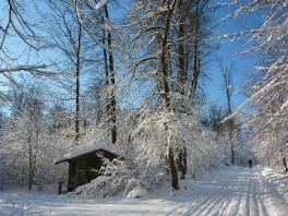 Winter wonderland_12