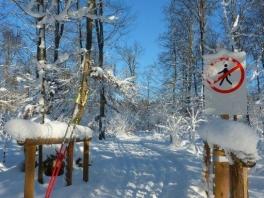 Winter wonderland_3